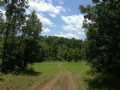 40 Acres W/ Pond & Trees $500 Down