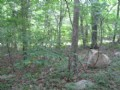 Secluded 3+ Acres Near Chapel Hill