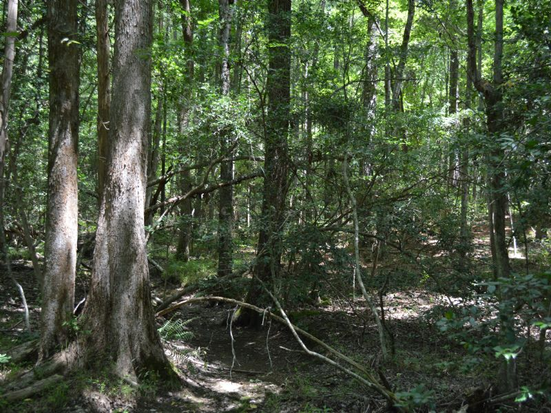 5.012 Acres Secluded Woods : Moncure : Chatham County : North Carolina