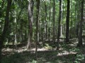 10.174 Acres Gorgeous Hardwoods : Moncure : Chatham County : North Carolina