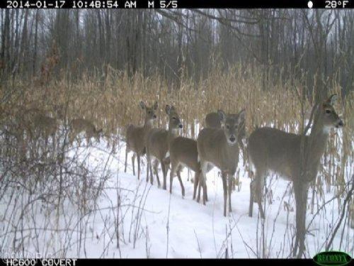 40 Acre Deer Hunting Parcel : Marshall : Calhoun County : Michigan