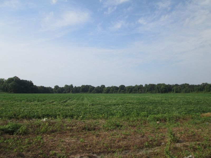 Farmland With Double Road Frontage : Millwood : Ware County : Georgia
