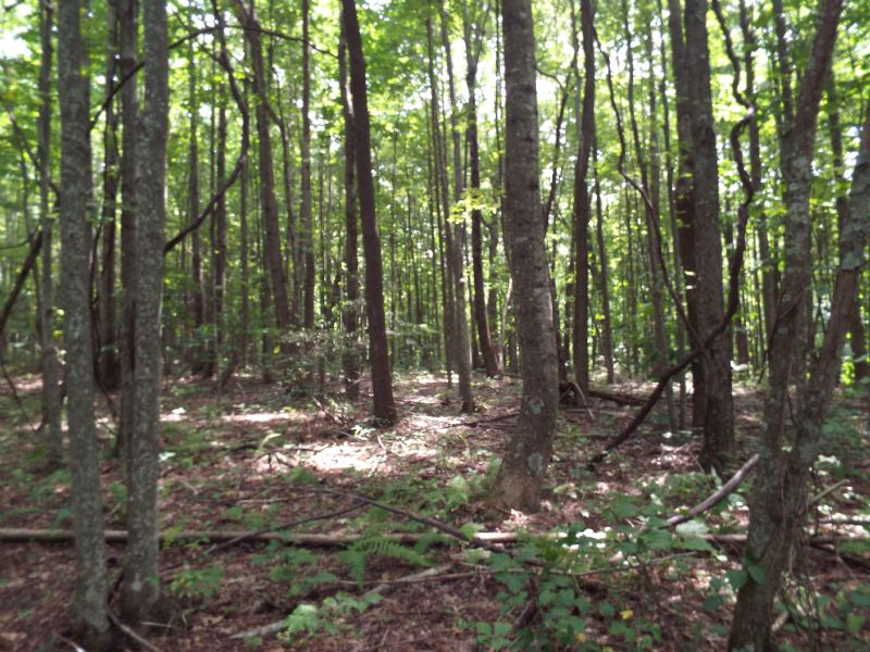 Straight Fork Forest : Fort Blackmore : Scott County : Virginia