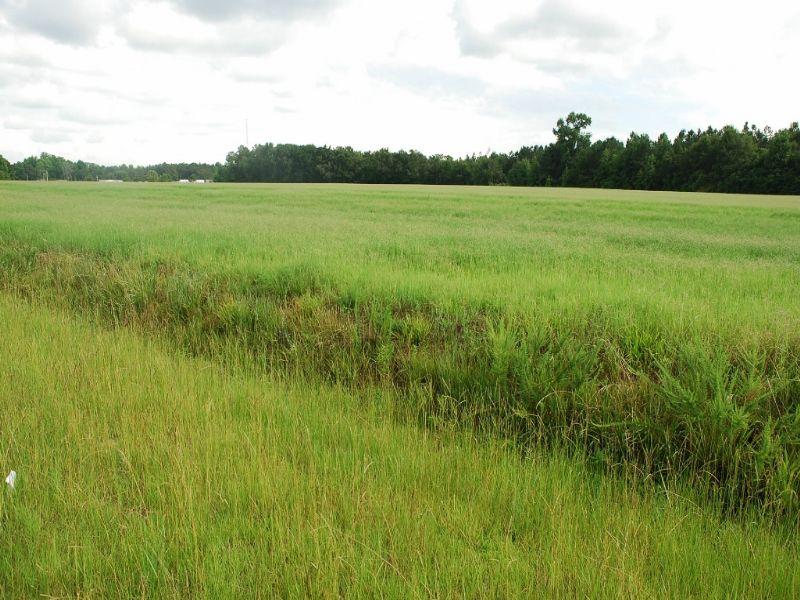 Nice Farm On Wire Grass Road : Fairmont : Robeson County : North Carolina
