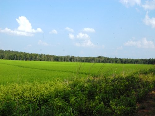Duck And Deer Hunting Property : Mayflower : Faulkner County : Arkansas
