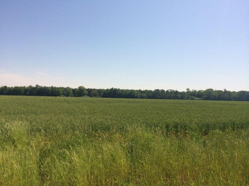 Good Farm North Of Dillon : Dillon : Dillon County : South Carolina