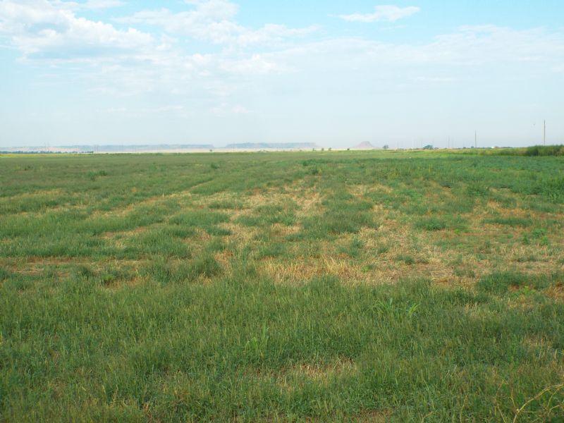 868 Acres- Cropland- Oreinta Area : Fairview : Major County : Oklahoma