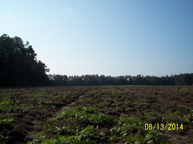 Mount Carmel Farm : Walterboro : Colleton County : South Carolina