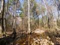 The Slade Tract : Monticello : Jefferson County : Florida