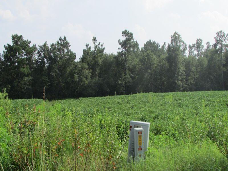 Bayboro-Johnson South : Conway : Horry County : South Carolina