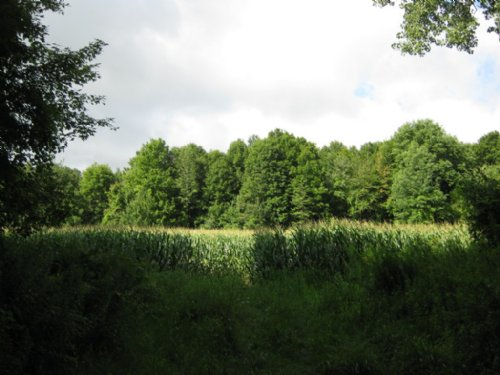 New York Farmland 26 Acres : Ira : Cayuga County : New York