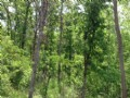 17 Acres Paved Road Only $500 Down