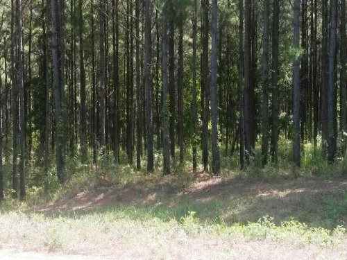 15 +/- Acres On Cr 2225 : Troy : Pike County : Alabama