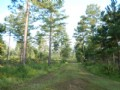 206 Acre Recreational Tract