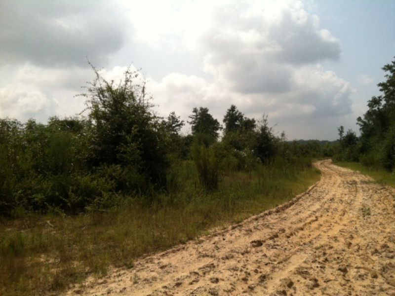 Affordable Sw Ga Hunting Tract : Cuthbert : Randolph County : Georgia