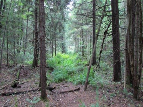 Balsam Forest - Hunting Camp Lot : Lowville : Lewis County : New York