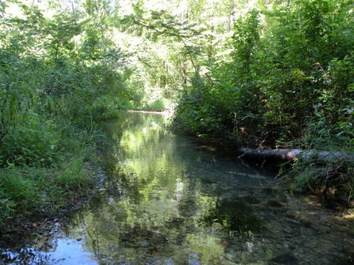 Price Reduced Timber & Hunting Land : Malvern : Hot Spring County : Arkansas
