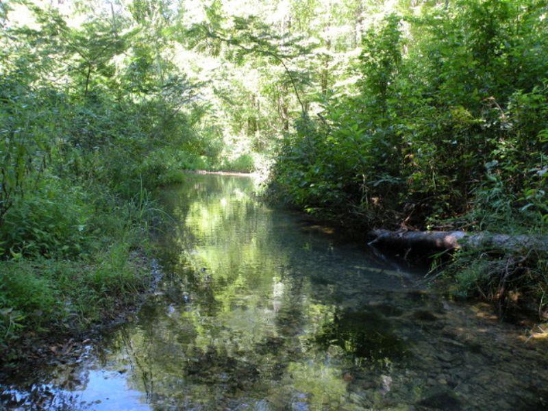 Price Reduced Timber & Hunting Land : Malvern : Hot Spring County : Arkansas