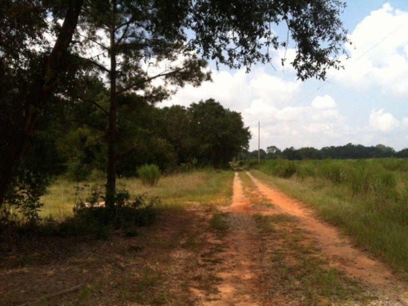 $1,000 / Acre : Cuthbert : Randolph County : Georgia