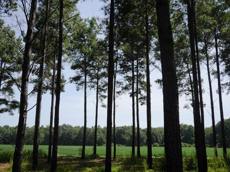 Tobacco Lane Farm : Brooklet : Bulloch County : Georgia