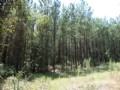 20 Acres Timber