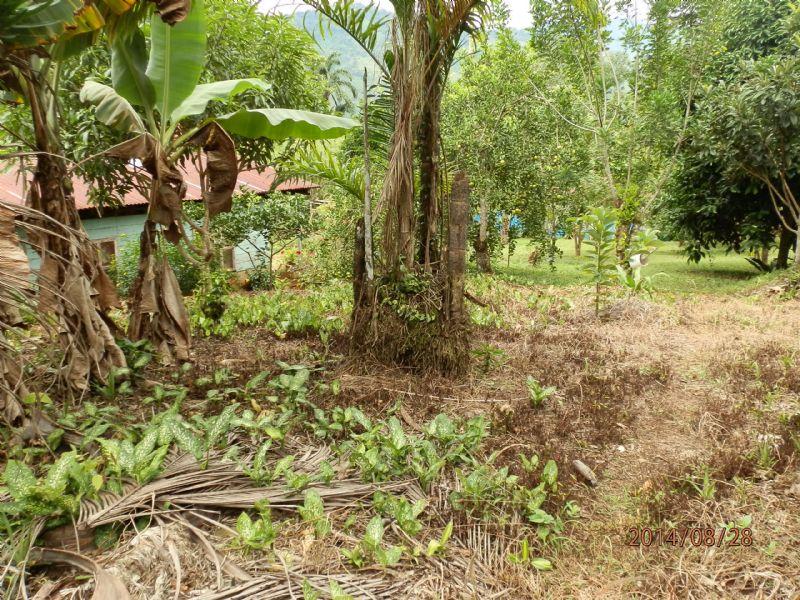 15 Acre Mini Farm W House And Cabin : Tucurrique De Cartago : Costa Rica