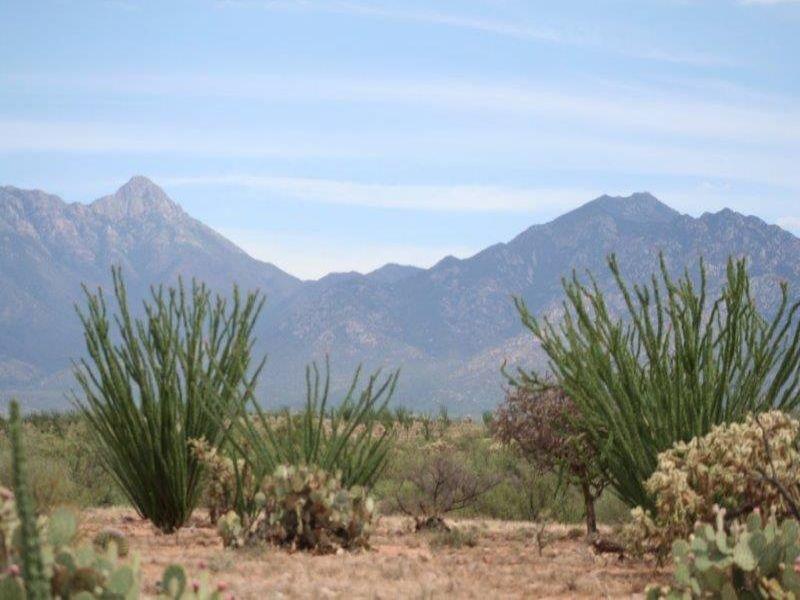 Canoa Preserve : Green Valley : Santa Cruz County : Arizona