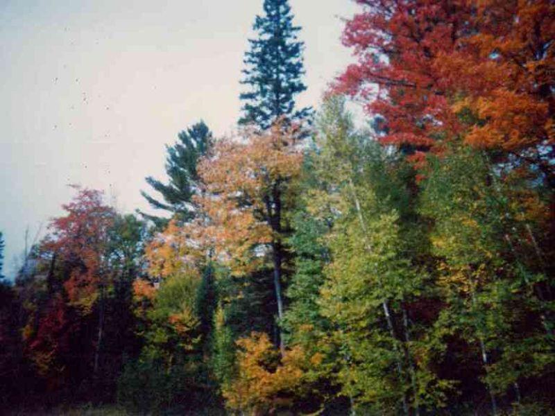 Tbd Pole Line Rd (3), Mls# 1082929 : Mohawk : Keweenaw County : Michigan