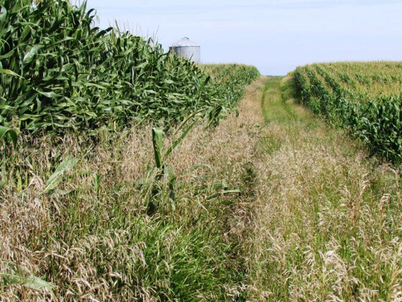 160 Farm And Recreational Land : Clear Lake : Deuel County : South Dakota