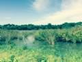 46 Acres Of Fishing Land