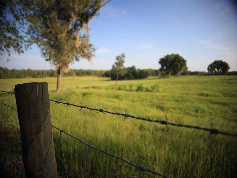 Crazy B Ranch : Bryceville : Nassau County : Florida