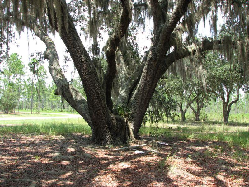 Deep Creek Plantation : Bryceville : Nassau County : Florida