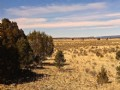 30 Acres For $21,000.00