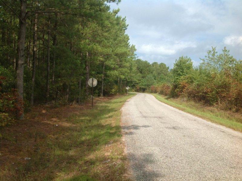 12 Acre Homesite In Orrville : Orrville : Dallas County : Alabama