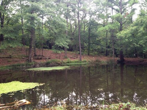 12 +/- Acres With A Pond : Banks : Pike County : Alabama