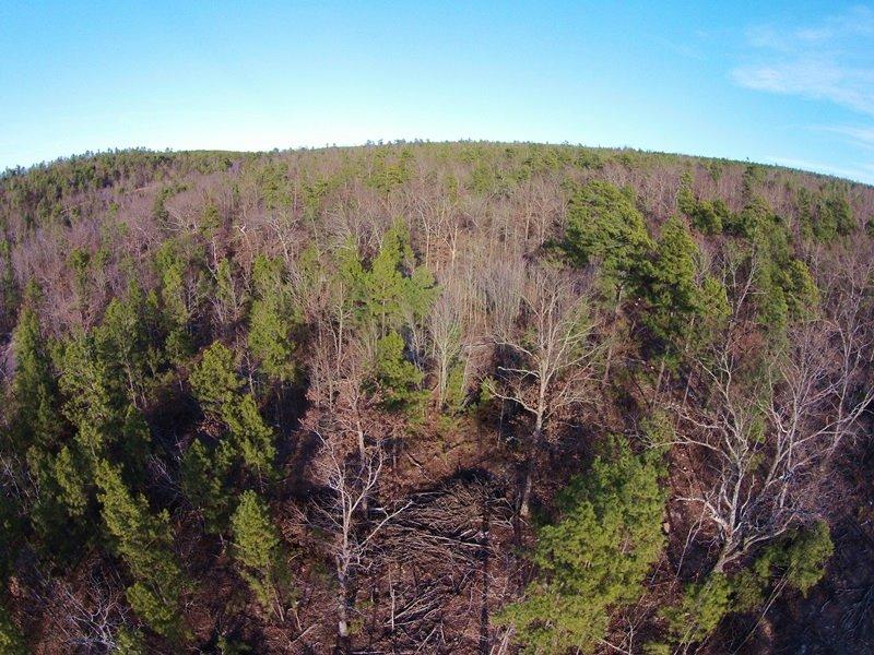 Black Fork Creek Tract 4 : Nashoba : Pushmataha County : Oklahoma