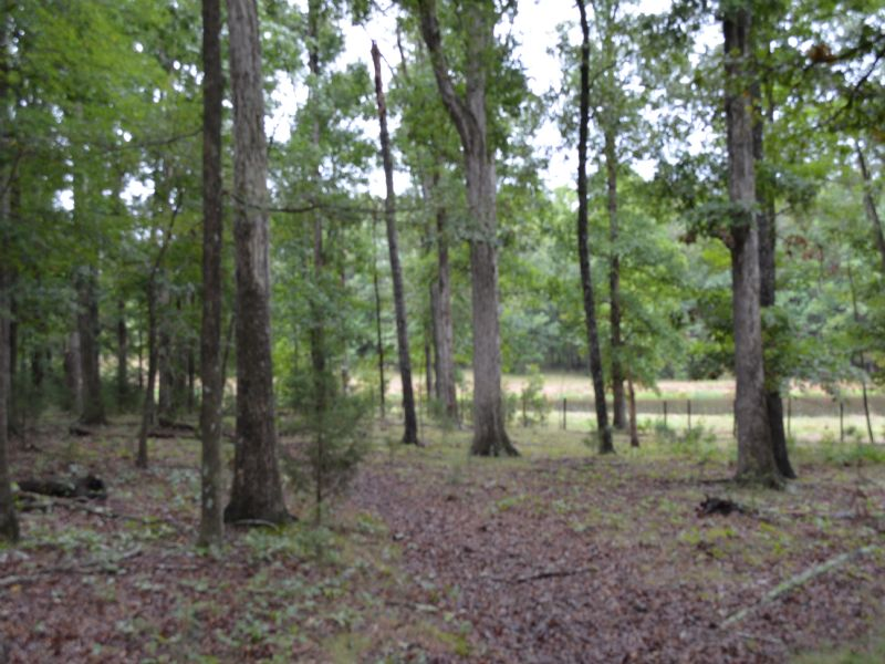 Farmer's Delight 78.351 Acres : Bear Creek : Chatham County : North Carolina