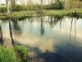 21 Acres 700' Creek Use Payne Lake