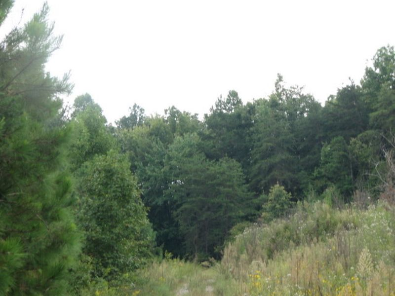 Bledsoe: Great Hunting With Creek : Pikeville : Bledsoe County : Tennessee