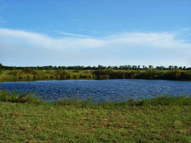 Beautiful, Rolling 33 Acres : Paris : Lamar County : Texas