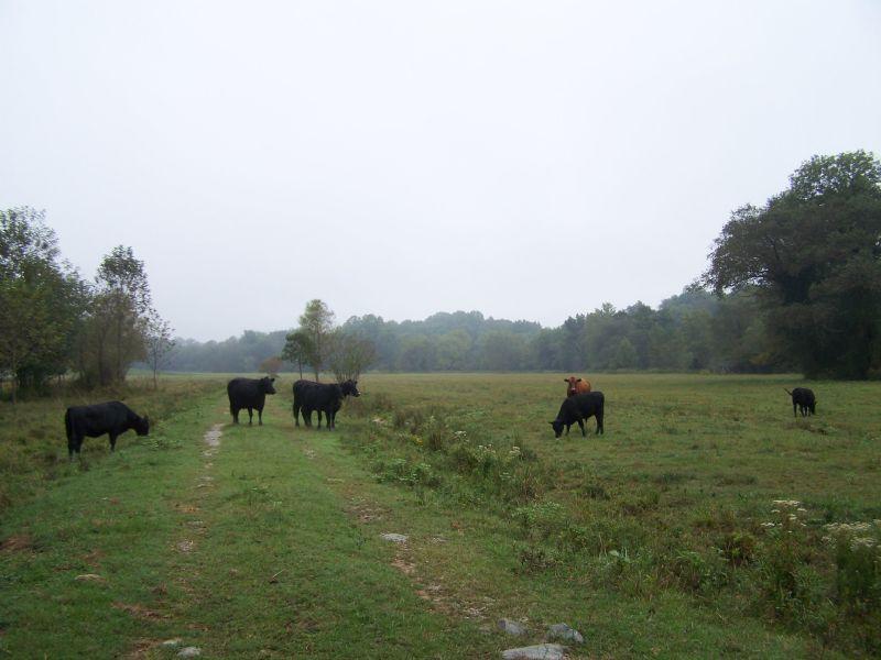 100 + Acres : Chatham : Pittsylvania County : Virginia