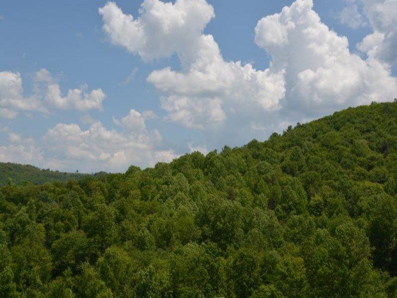 70+ Acres, Willis, Va : Willis : Floyd County : Virginia