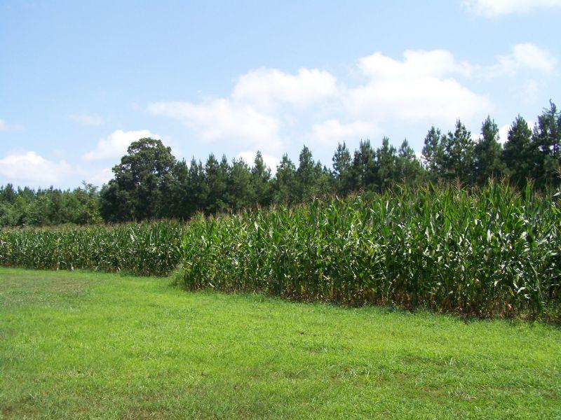 28.75 Acres Mountain Run Rd : Cascade : Pittsylvania County : Virginia