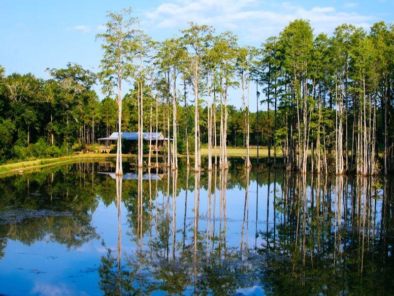 Tarva Pines : Albany : Dougherty County : Georgia