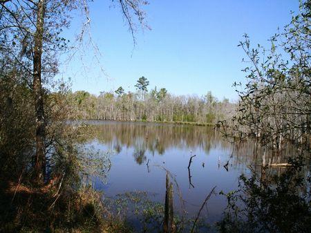 Old Smokehouse Farm : Quincy : Gadsden County : Florida