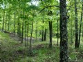 80 Acres Of Timberland For Sale : Conway : Faulkner County : Arkansas