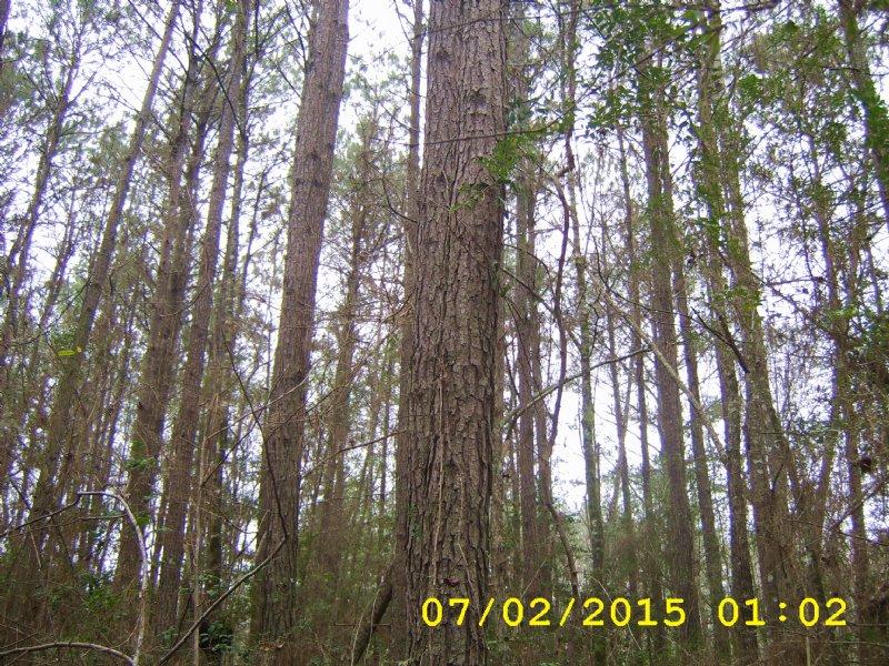 118 Acres : Shubuta : Wayne County : Mississippi