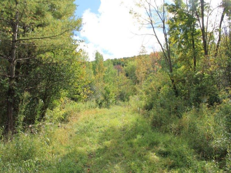 New York Hunting Land Near Albany : Pittstown : Rensselaer County : New York