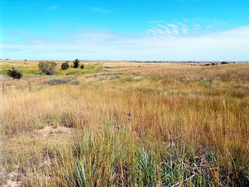 1707 Acres * Grass * Crp : Buffalo : Harper County : Oklahoma