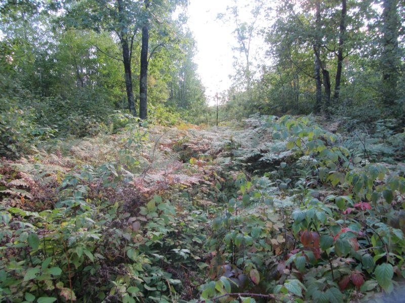 Acreage On Fawn Lake Rd : Lake Tomahawk : Oneida County : Wisconsin